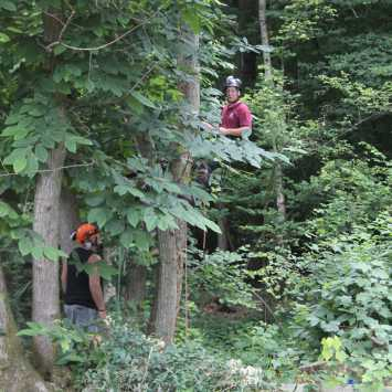 NPTC Tree climbing and aerial rescue assessment