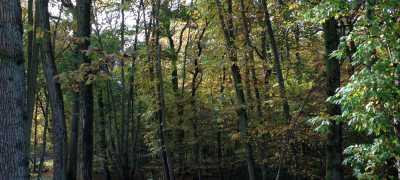Woodland during Autumn