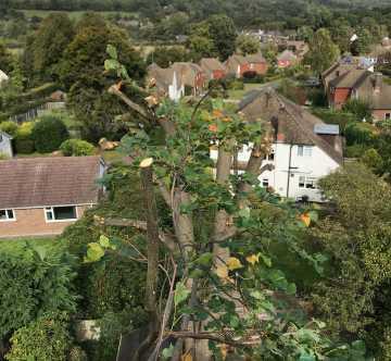 Tree surgery Contracting Groombridge Sussex