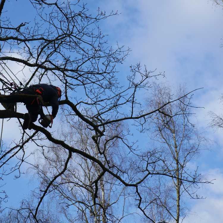NPTC aerial cutting