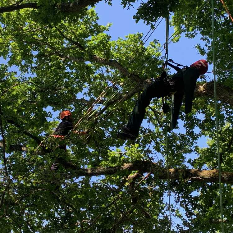 aerial rescue L2