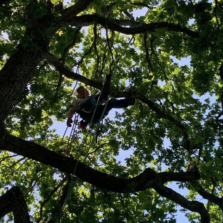L2 tree climbing