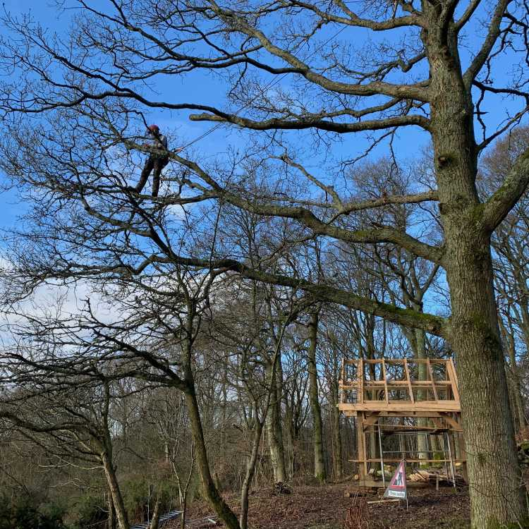 Branch walk over our new climbing shelter