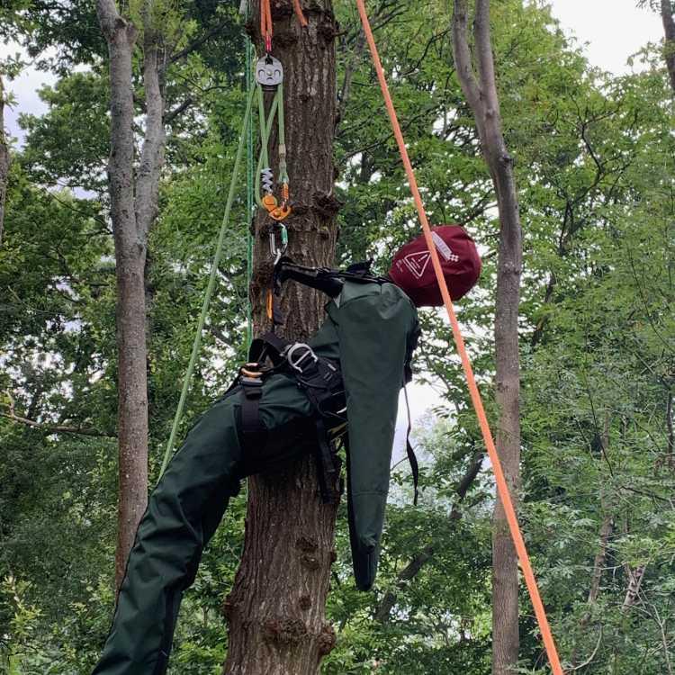 manikin aerial rescue