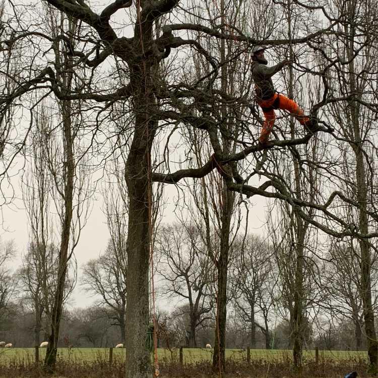 Climbing - branch walk