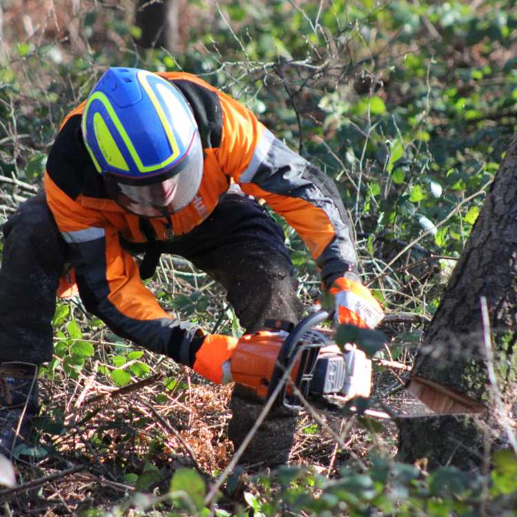 Chainsaw felling and processing trees