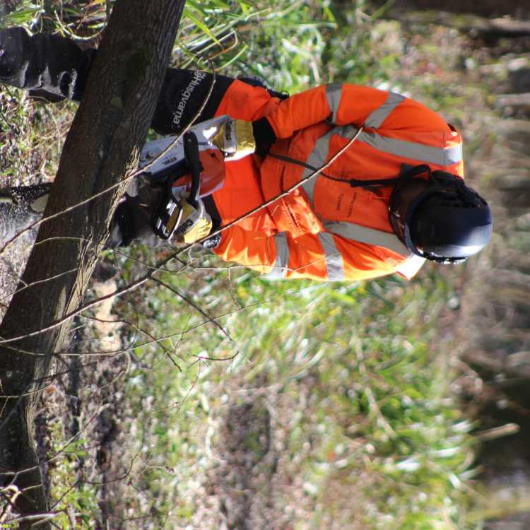 NPTC Chainsaw felling and processing trees