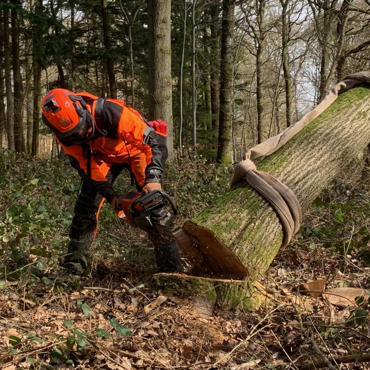 Felling trees over 380mm