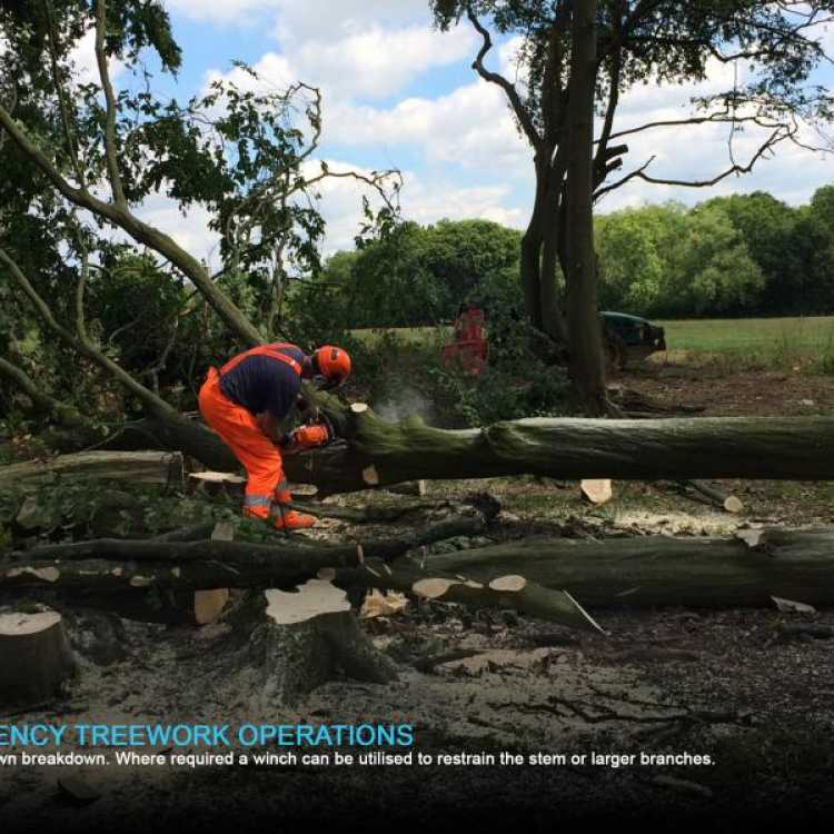 Crown break down emergency tree work