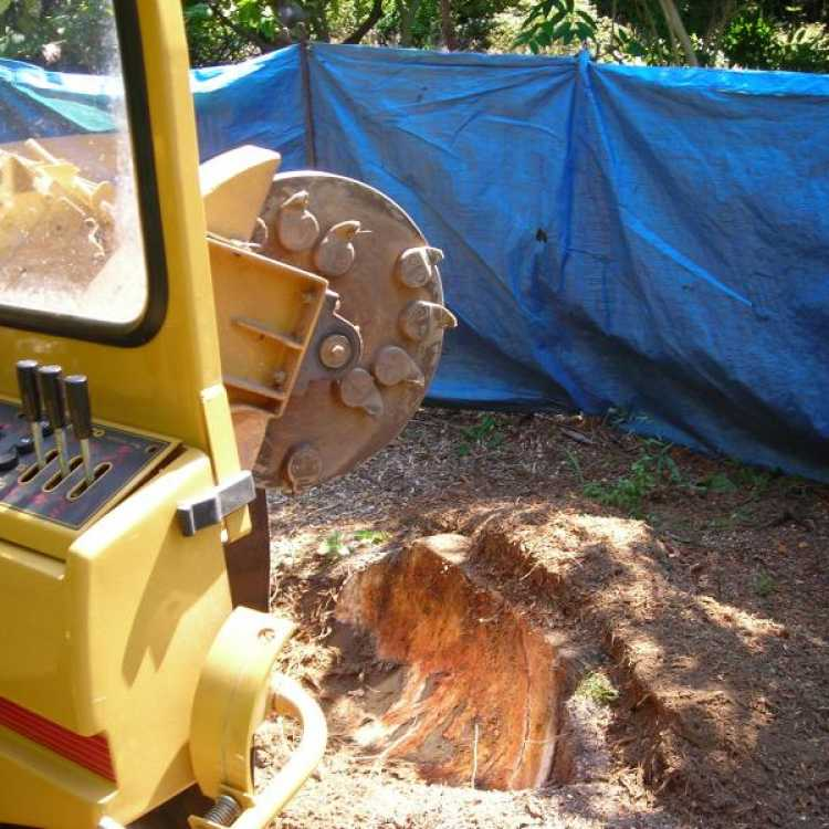 Machinery cutting dead tree stump