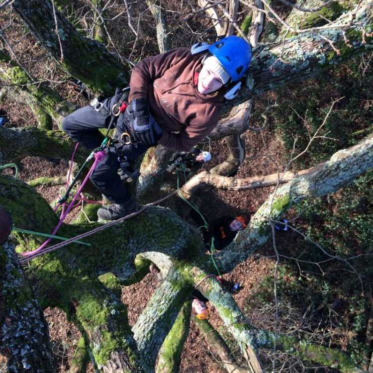 Tree climbing and aerial rescue training