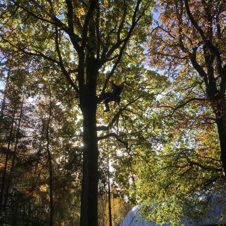 aerial cutting - safety work