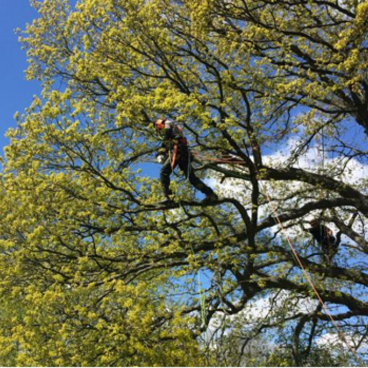 NPTC Aerial Tree Cutting training