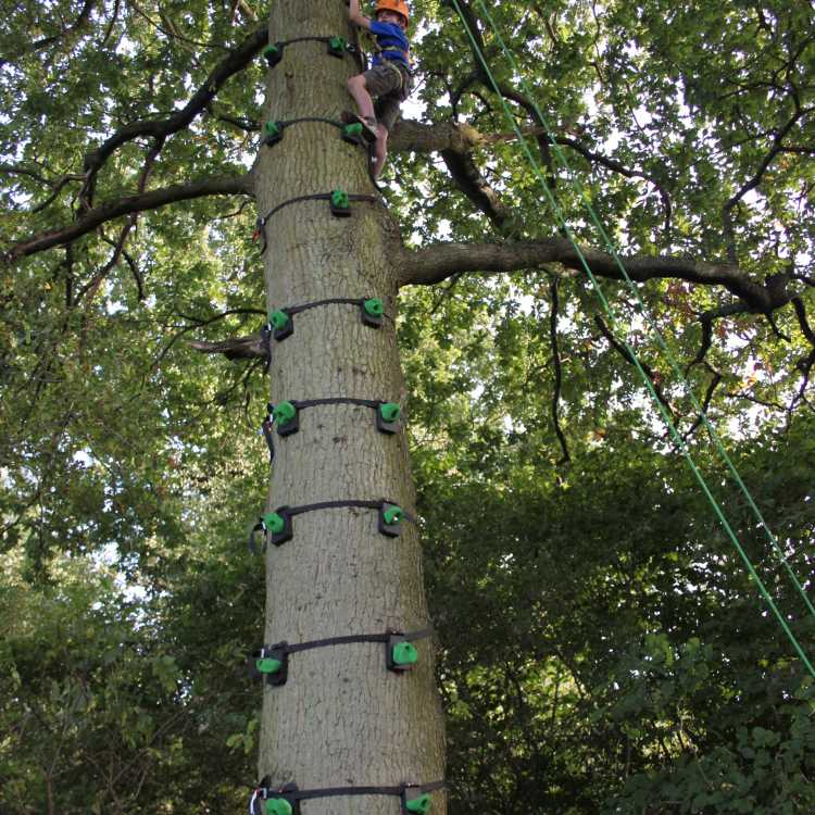 Using Tree Monkey to climb the tree