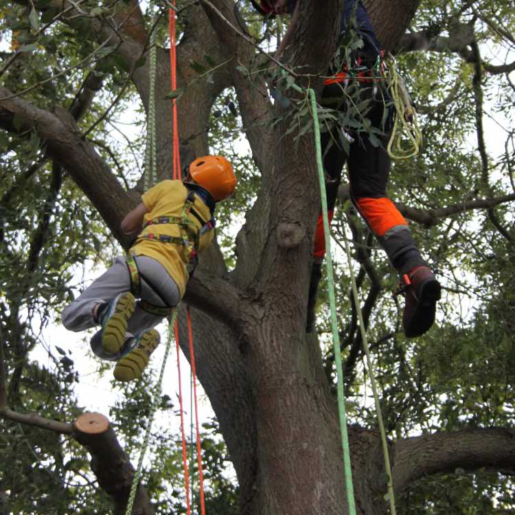 A keen young climber (9) uses the standard prussic system