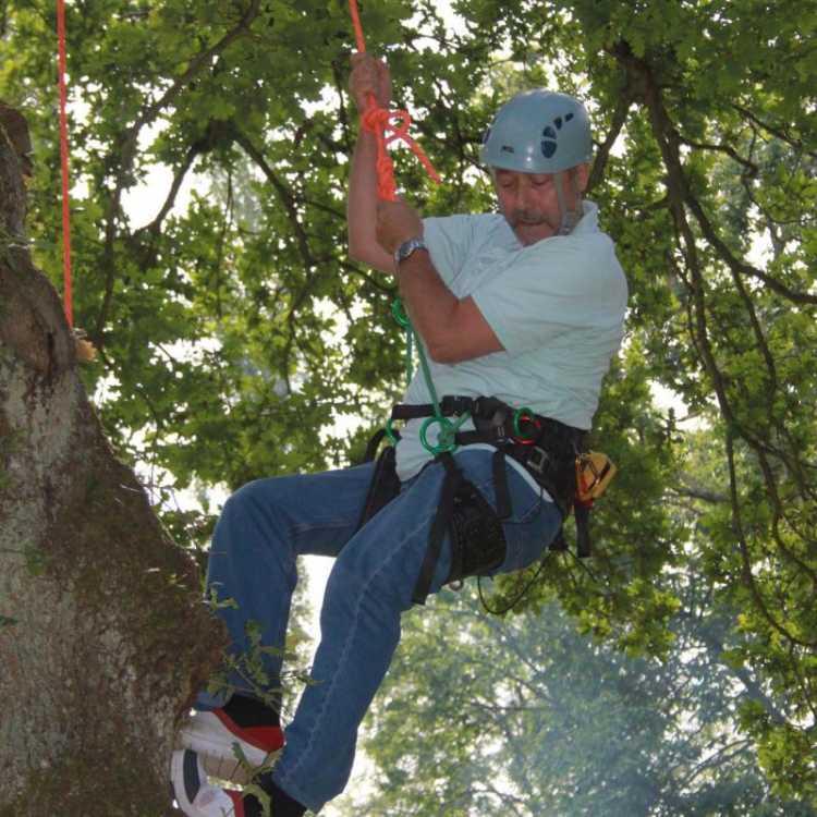 Man climbing down a tree