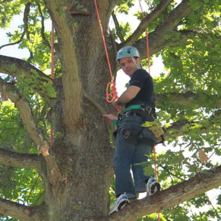 Man standing on branch near the top of a tree