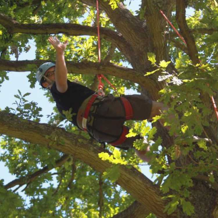 Man waving whilst tree climbing
