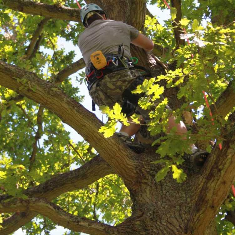 Man doing tree climbing with his gear on
