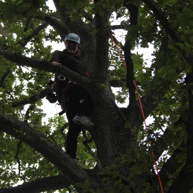 Woman smiling whilst tree climbing