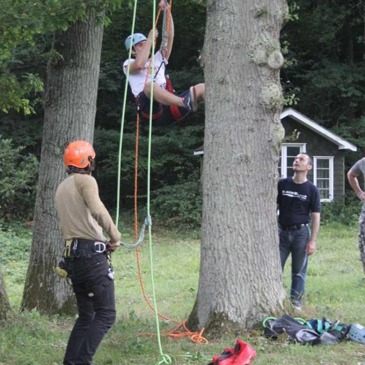 Man starting to climb a tree