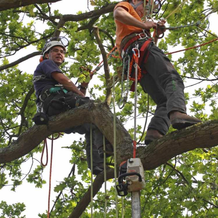 Aerial Treework