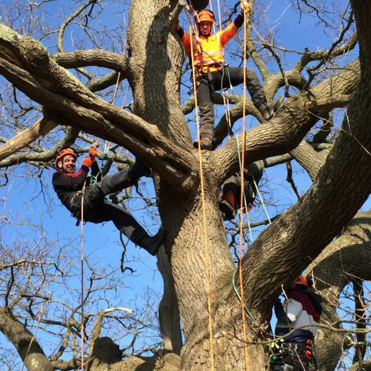 Scott Fraser tree climbing training Kent