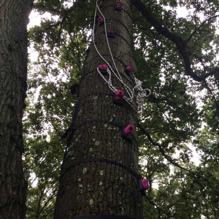 Tree stem climbing holds
