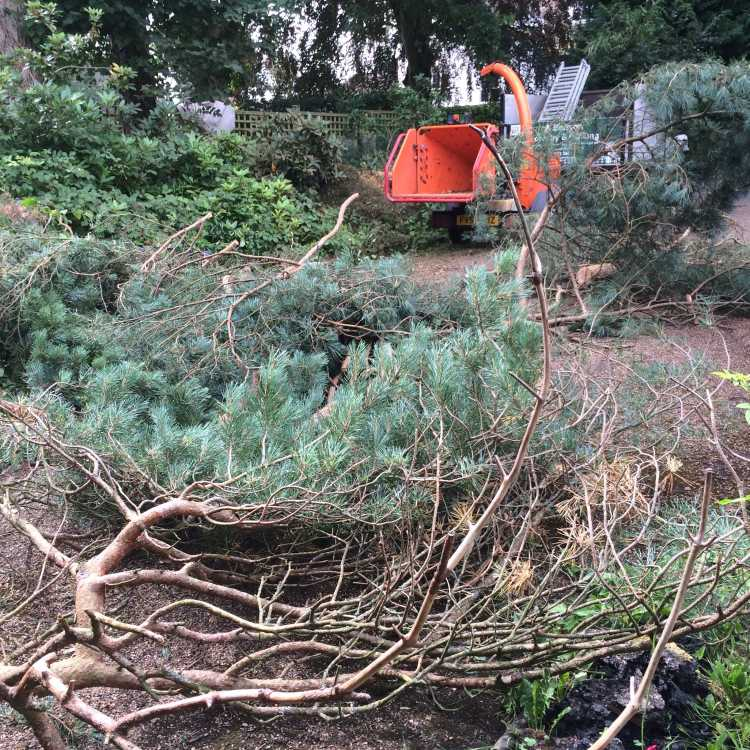 Chipper machinery surrounded by trees that have been felled by Scott Fraser Training