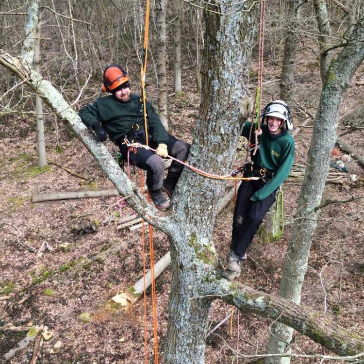 Two happy tree climbers climbing up a tree
