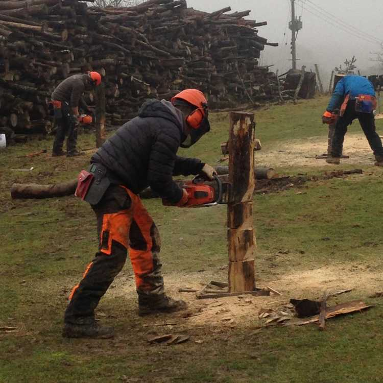 perfecting felling cuts before heading to the woods - gains confidence in cuts