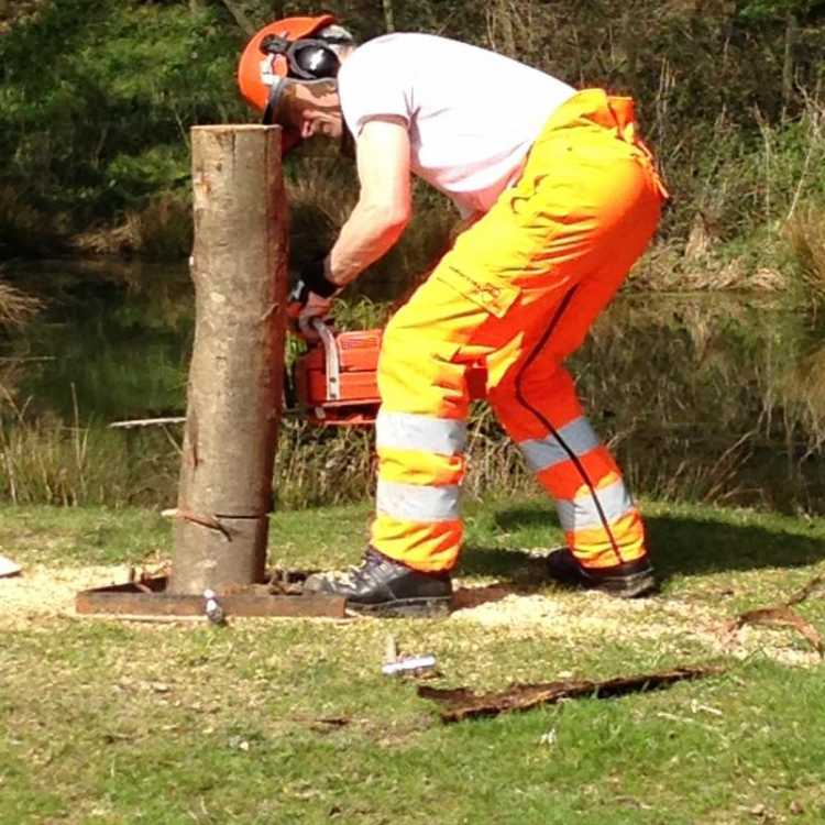 Felling posts for felling cuts practice