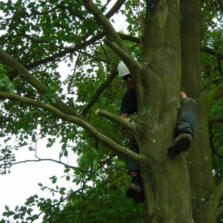 Final Pruning Cut