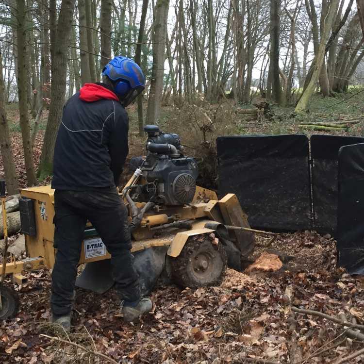 NPTC stumpgrinder training
