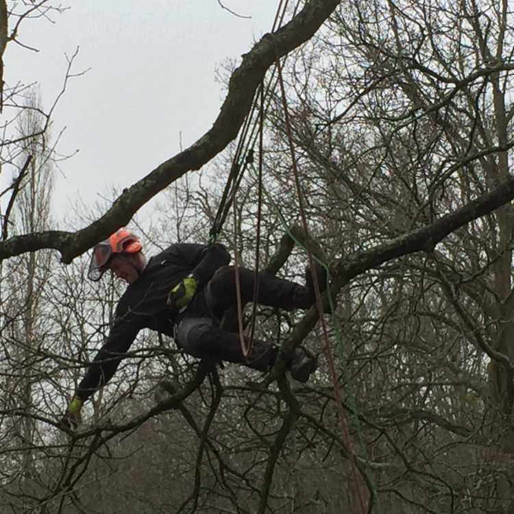Member of the public taking part in our tree climbing course whilst he is up a tree