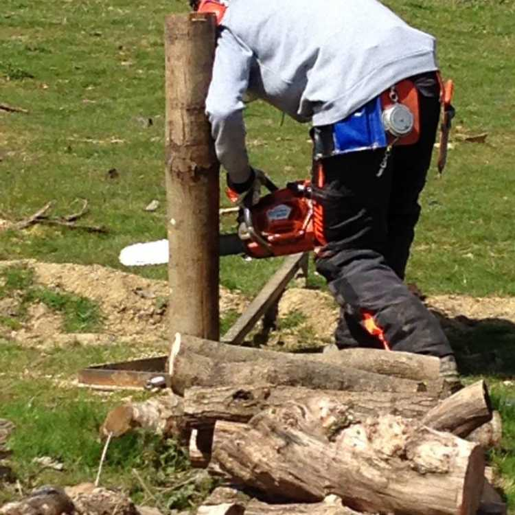 Standard felling cut practice