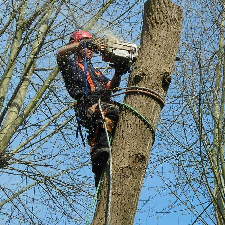Advanced Treework cutting