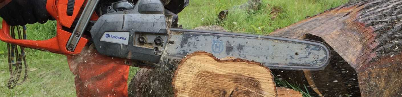 Ground Based Chainsaw cutting through part of a tree
