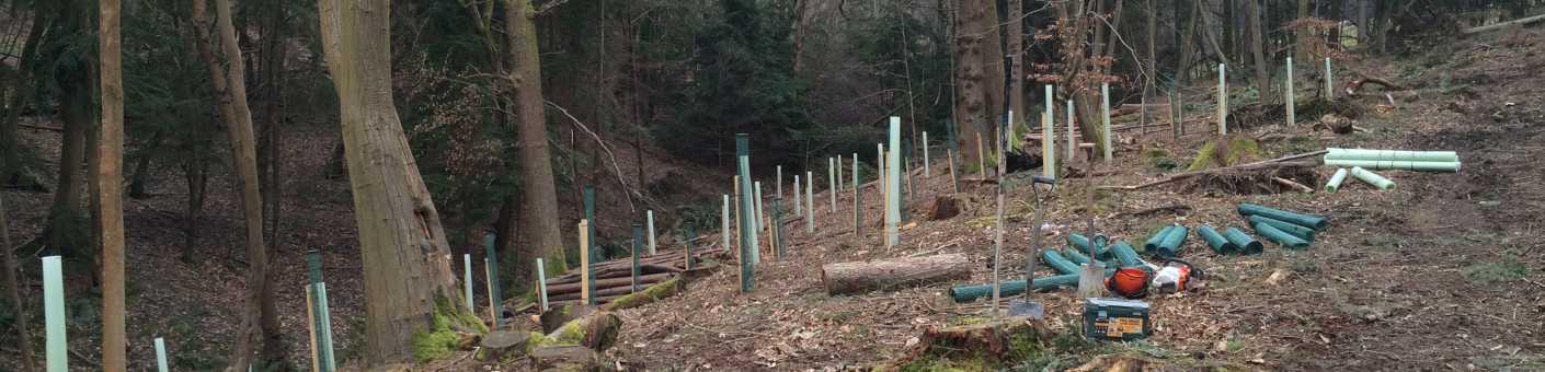 Scott Fraser Training team planting new trees on a site