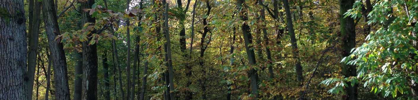 Woodland during Autumn