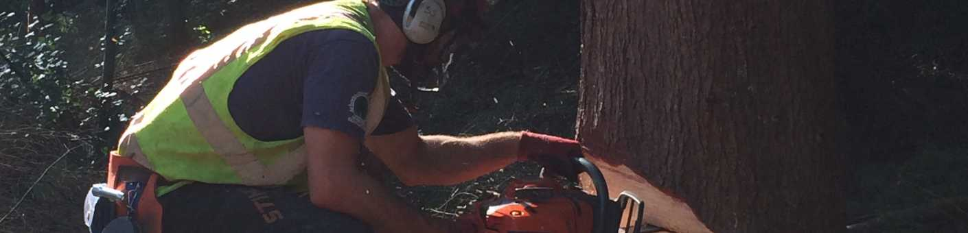 Man using chainsaw to cut a tree