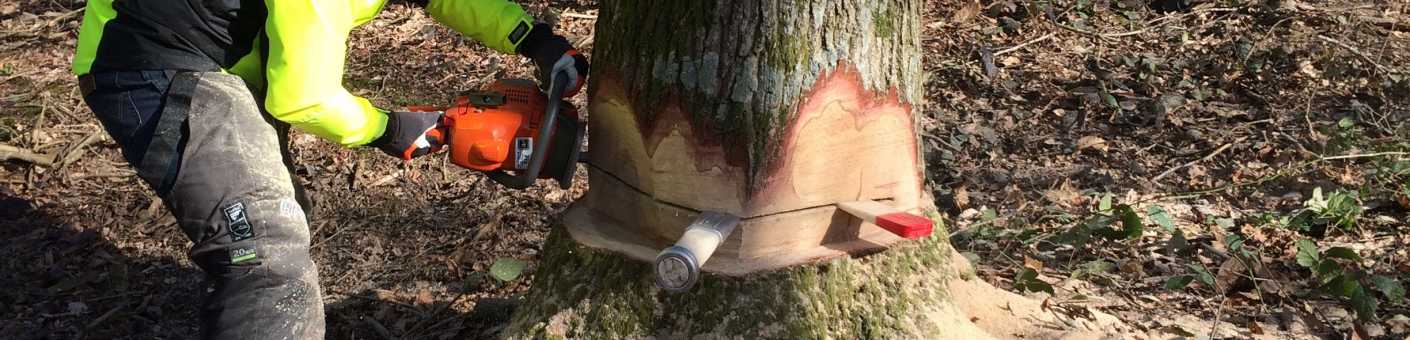 Tree cutter cutting the bottom of a tree