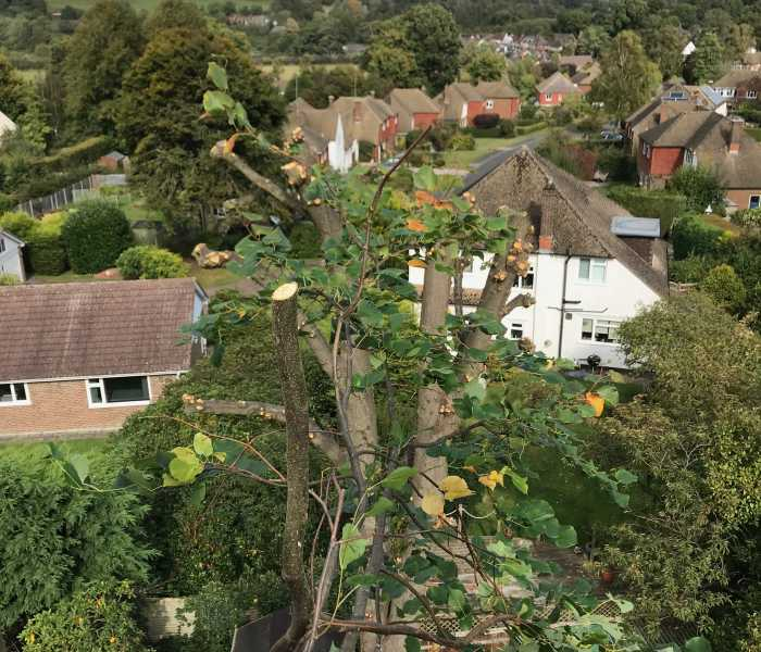 Tree surgery Contracting Groombridge Sussex