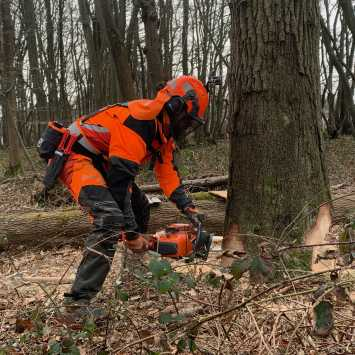 City & Guilds felling trees over 380mm