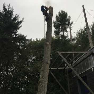 Oak pole top levelled off using Husqvarna 550XP