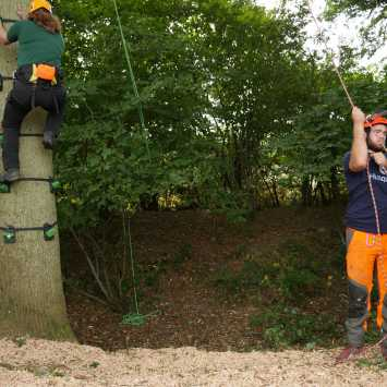 Tree climbing experience