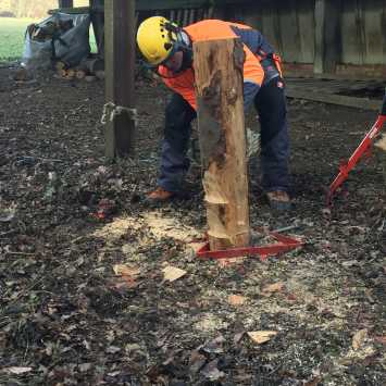 felling trees up to 380mm practice