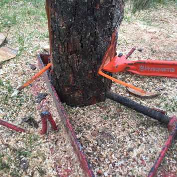 City & Guilds felling trees up to 380mm