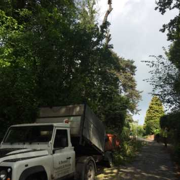 Tree Surgery Contracting Mayfield Sussex
