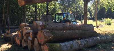 Chopped log on the ground